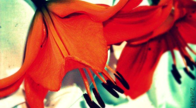 Beautiful Flower ~ India Arie